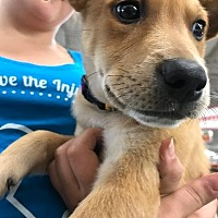 Adopt A Pet :: Biscuit - Gilmer, TX
