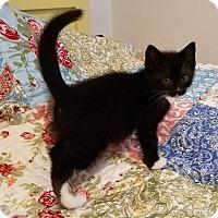 Adopt A Pet :: Sonova - Geneseo, IL