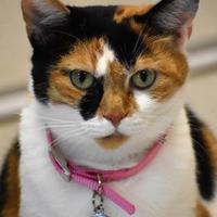 Adopt A Pet :: Zoey - North Myrtle Beach, SC