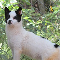 Adopt A Pet :: Cookie - Muskegon, MI