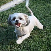 Adopt A Pet :: Chloe - Henderson, NV