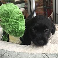 Adopt A Pet :: Samwel - Monticello, GA