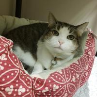 Adopt A Pet :: Babs - Columbus, OH
