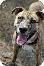 Terrier (Unknown Type, Medium) Mix Dog for adoption in Tinton Falls, New Jersey - Baby
