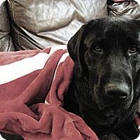 Adopt A Pet :: Vader - Franklin, TN