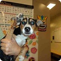 Adopt A Pet :: A1035635 - calimesa, CA