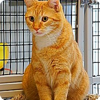 Adopt A Pet :: Ernie - Victor, NY