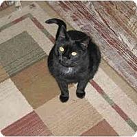 Adopt A Pet :: Ebony - North Boston, NY