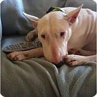 Adopt A Pet :: Emma - Arlington, TX