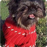 Adopt A Pet :: Teiji - Mays Landing, NJ