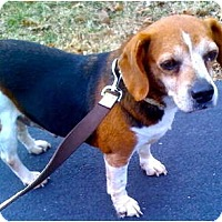Adopt A Pet :: Kori - Indianapolis, IN