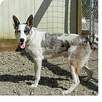 Adopt A Pet :: COURTESY AZTEC - Lynnwood, WA