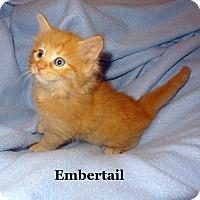 Adopt A Pet :: Embertail - Bentonville, AR