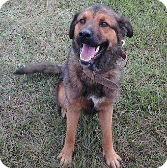 German Shepherd Dog Mix Dog for adoption in Charlotte, North Carolina - GONZALES