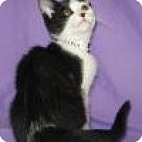Adopt A Pet :: Wrigley - Powell, OH