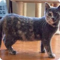 Adopt A Pet :: Athena - McHenry, IL