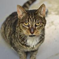 Adopt A Pet :: Ember 162254 - Atlanta, GA