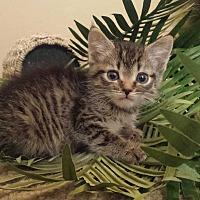 Adopt A Pet :: cambria - Sacramento, CA