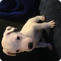 Adopt A Pet :: Rocky - Colton, CA