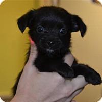 Adopt A Pet :: Kinsley - Rockwall, TX