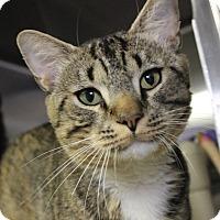 Adopt A Pet :: Ranger Rick - Middletown, CT