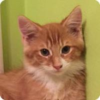 Adopt A Pet :: Abe - Irvine, CA