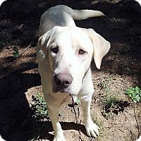Adopt A Pet :: Omar - Huntsville, AL