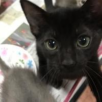 Adopt A Pet :: Yarrrow - Miami, FL