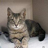 Adopt A Pet :: Perdita - Paris, ME