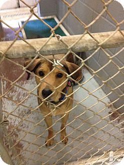 Shepherd (Unknown Type)/Terrier (Unknown Type, Medium) Mix Dog for adoption in Schererville, Indiana - Travis