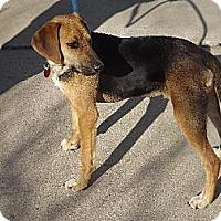 Adopt A Pet :: Sammy - Schererville, IN