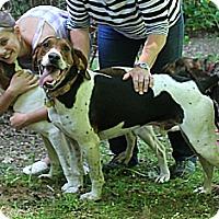 Adopt A Pet :: Buster Brown - Murphy, NC
