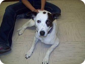 Terrier (Unknown Type, Medium) Mix Dog for adoption in Sterling, Kansas - Spot