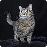 Adopt A Pet :: Charlie (C17-033) - Lebanon, TN