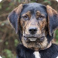 Adopt A Pet :: *Jake - PENDING - Westport, CT
