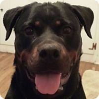 Adopt A Pet :: Madame Belfry - Frederick, PA