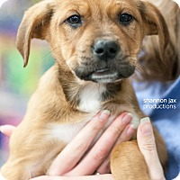 Adopt A Pet :: Dude - Gainesville, FL