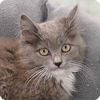 Adopt A Pet :: Gemma - Redondo Beach, CA
