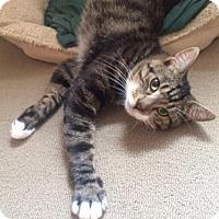 Adopt A Pet :: Peter Cottontail - Trenton, NJ