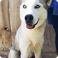 Adopt A Pet :: Nova- ADOPTED 7/15/17! - Apple Valley, CA