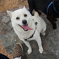 Adopt A Pet :: Princess - Oakton, VA