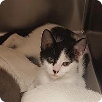 Adopt A Pet :: Katy Purry - Americus, GA