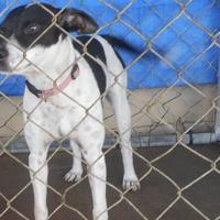 Adopt A Pet :: Malorie - Opelousas, LA