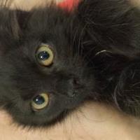 Adopt A Pet :: Starla - Winona, MN