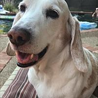 Adopt A Pet :: Fody - Tracy, CA