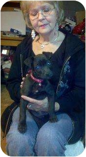 American Pit Bull Terrier Mix Puppy for adoption in Carrollton, Georgia - CJ