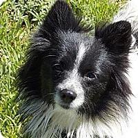 Adopt A Pet :: RAINE - Hesperus, CO
