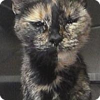 Adopt A Pet :: Gia - St. Petersburg, FL
