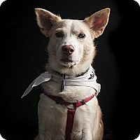 Adopt A Pet :: Wasabi - Madison, WI