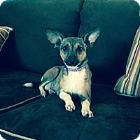 Adopt A Pet :: Lilli- 9 lbs - Marlton, NJ